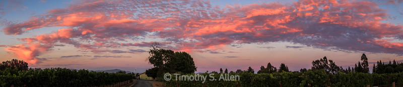 Panoramic Sunset of Vineyards