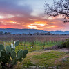 Sun Setting Over Napa Valley