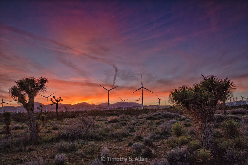 Joshua Trees and Wind Turbines at Sunset