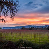 A Winter Sunset in the Napa Valley