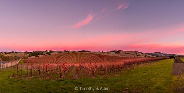 Crane Creek Vineyard at Sunset