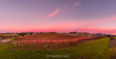 Panoramic View of a Sonoma County Wine Country Vineyard