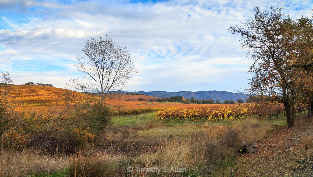 White Clouds and Autumn Vines
