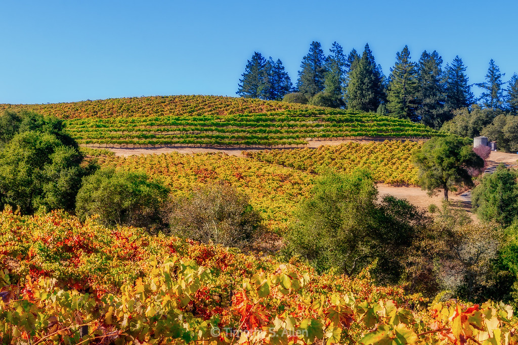 Vineyards in the Dry Creek Area