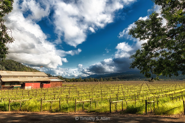 A Barn in the Napa Valley