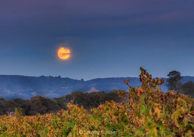 Full Moon Over the Vineyard