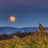 Full Moon Over the Vineyard