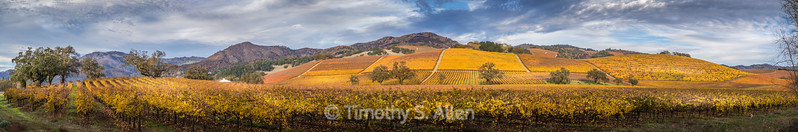 Panoramic View of Sonoma Wine Country Vineyards