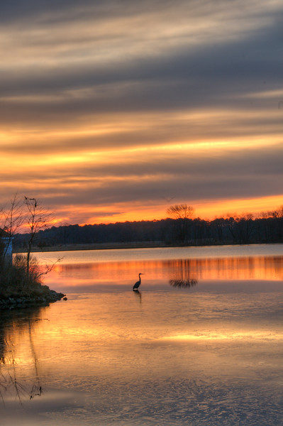 Blue Heron at Sunriae