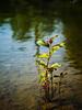 Beaver_Lake_24Jun2014_0007