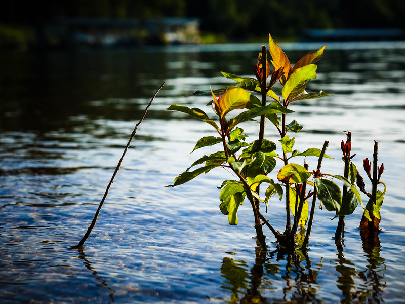Beaver_Lake_24Jun2014_0005