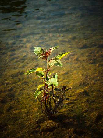 Beaver_Lake_24Jun2014_0006