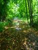 VanWinkle_Trail_26Jun2014_0059