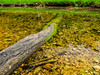 VanWinkle_Trail_26Jun2014_0030