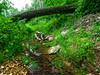 VanWinkle_Trail_26Jun2014_0013