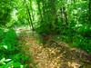 VanWinkle_Trail_26Jun2014_0062