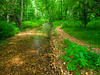 VanWinkle_Trail_26Jun2014_0052