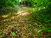 VanWinkle_Trail_26Jun2014_0060