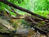 VanWinkle_Trail_26Jun2014_0049