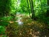 VanWinkle_Trail_26Jun2014_0057