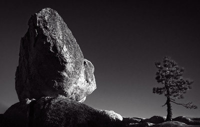 Silver Rock and Tree