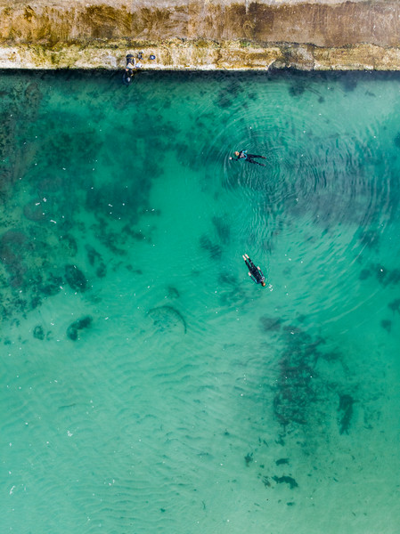 Camps Bay tidal pool biodiversity survey, 2020