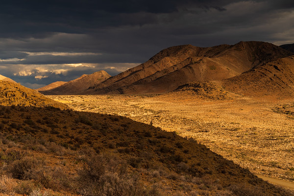 Dust of gold, Hope, Weltevreden Valley in the Karoo, Prince Albert, South Africa
