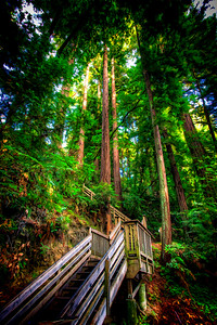 Stairs to trees