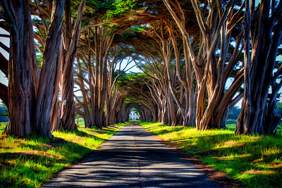 Point Reyes National Seashore Tree Tunnel