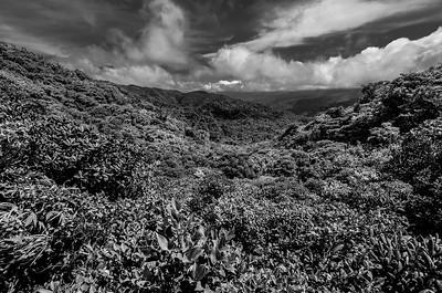 Rain Forest Blanket