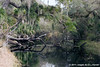 Swamp Refections