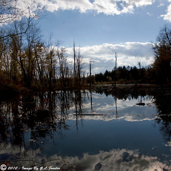 Swamp & Reflections