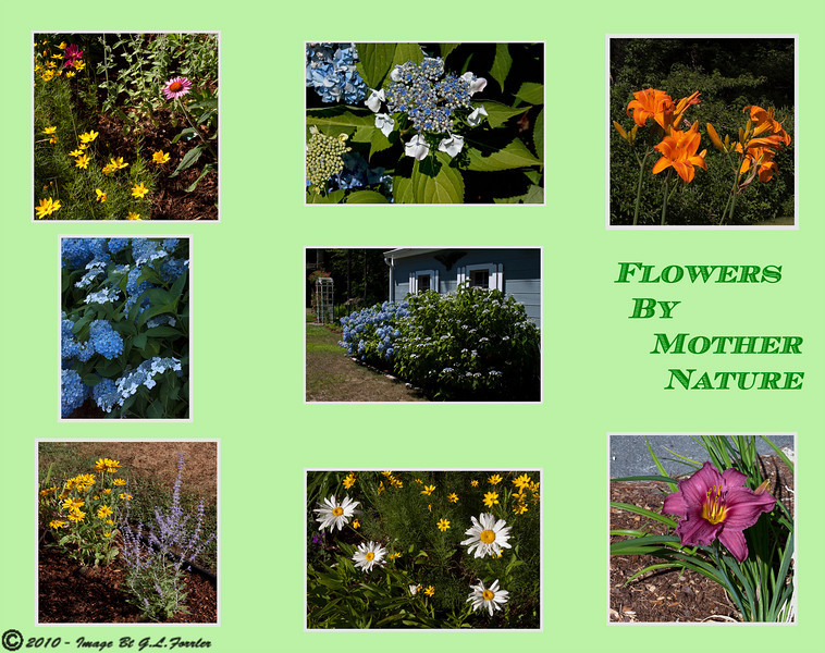 Flowers By Mother Nature