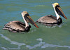 Pelicans Two