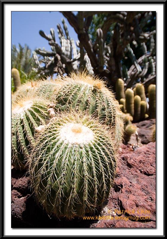 Desert Garden, HOT HOT HOT!!!!