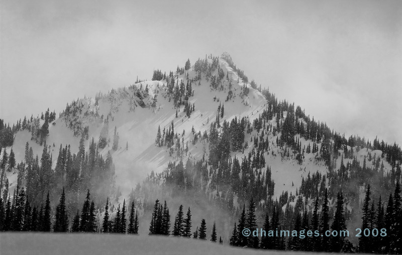 """en route to Hurricane Ridge.  This was pretty much the last """"view"""" I had before entering pea-soup fog."""