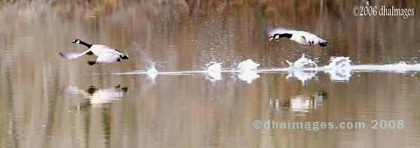 Water Walk 2 (20060319)