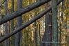 Rowe's Woods
