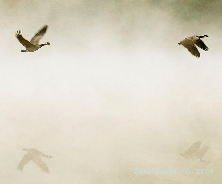 Geese Ascend...deep mist (20051027)