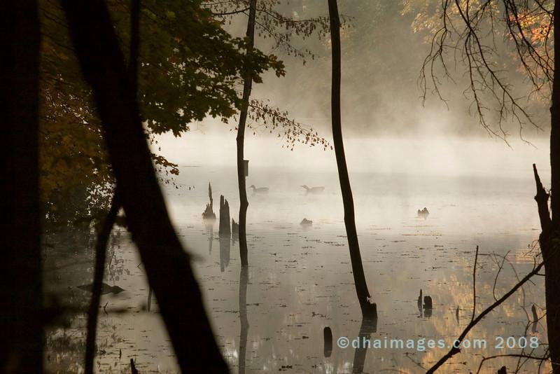 Morning Serenity 2: Rowe Woods, Cincinnati Nature Center