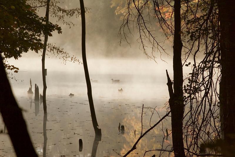 Morning Serenity 1: Rowe Woods, Cincinnati Nature Center