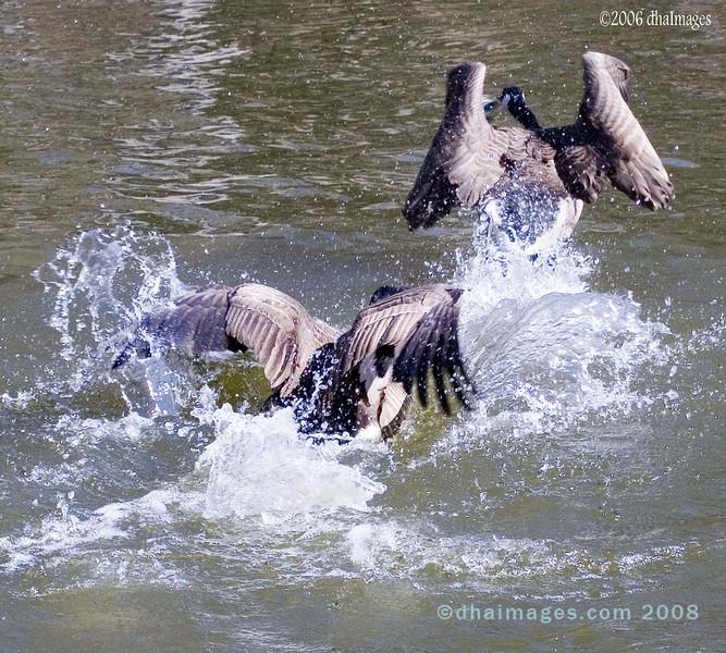 Wild Goose Chase 1 (20060305)