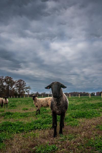Rettland Farm (49 of 105)