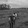 Rettland Farm (45 of 105)