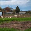 Rettland Farm (10 of 105)