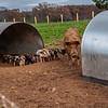 Rettland Farm (19 of 105)