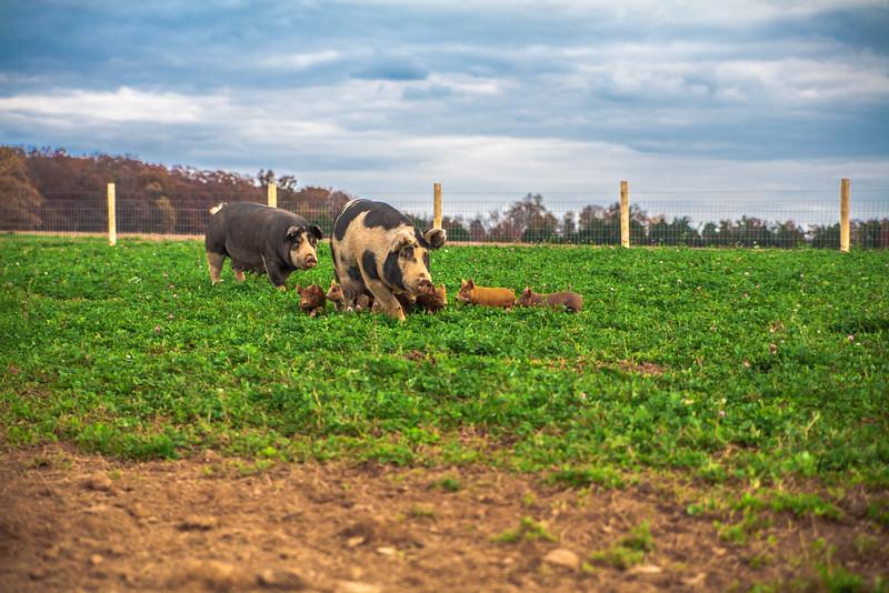 Rettland Farm (28 of 105)