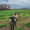 Rettland Farm (43 of 105)