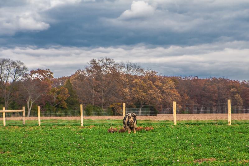 Rettland Farm (20 of 105)