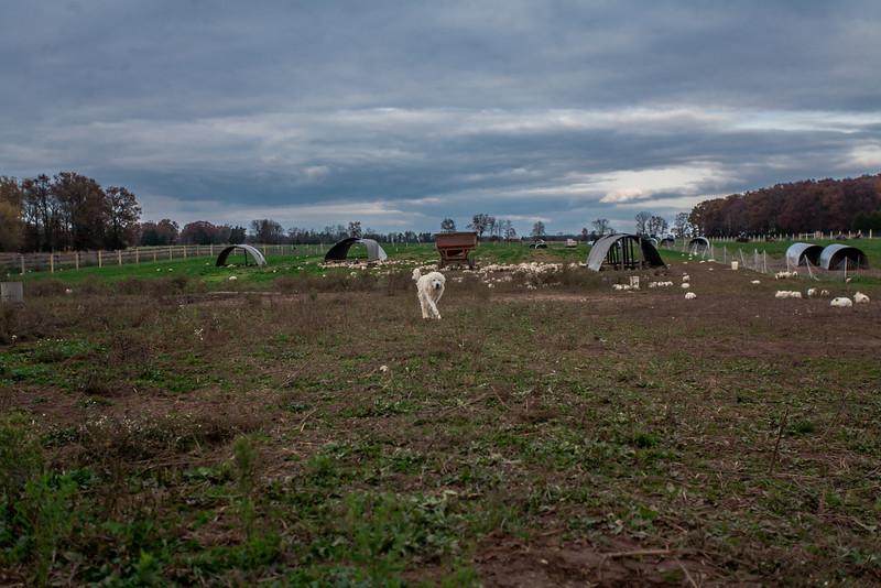 Rettland Farm (72 of 105)